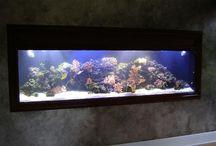 Ενυδρεία ψαριών