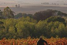 Riebeek Valley - South Africa