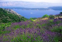 Wakacje w Chorwacji - wyspa Hvar