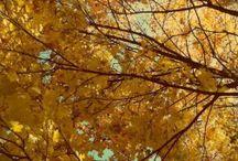 Alemanha / Outono na Alemanha