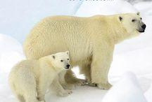 2015 Polar Bears Calendar
