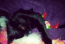 Its a cats life..