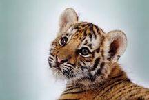 Animals / Cuteness