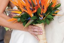 Strelitzia Weddings