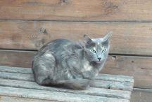 cats from tunus