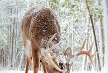 sne-dyr