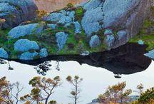 Scots pine trees on Sula island, Sogn og Fjordane, Norway #HeathrowGatwickCars.com