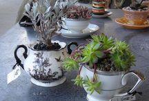 Porcelanas / by Fátima Albuquerque