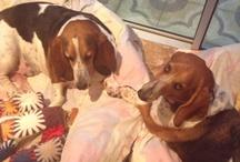 Ben and Meisie Basset / Basset cuties