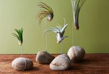 project airplants