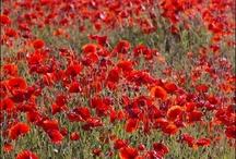 FLOWERS / by Peppy Rubinstein