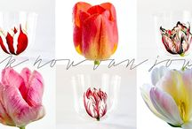 Ik Hou Van Jou / The Dutch way of saying 'I love you' and our ode to spring flowers.