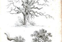 ağaç2