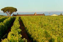 Crédit Agricole Grands Crus / Pourquoi s'intéresser au vin et plus précisément aux Grands Vins ? Parce que nous croyons que le vin est porteur de culture, de raffinement et d'échange. Il participe, de cette façon à l'image de notre Groupe, le Crédit Agricole, sensible à ces valeurs et à l'attachement historique qui le lie à la terre. Le CA Grands Crus a choisi de s'engager à travers l'acquisition de propriétés de prestige sur les plus beaux terroirs de France : Bordeaux, Bourgogne et Vallée du Rhône.