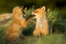 Wild Animals / Animaals ❤❤