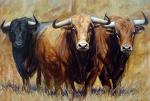 bull favoriet 1