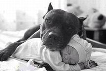 I love pit bulls!!! / by Elizabeth Trimble