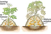 Veges and plants / Growing things