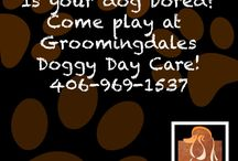 Groomingdales MT / http://groomingdalesmt.com/ If your looking for quality Billings dog daycare, check out our facility! At Groomingdale's Salon & Pawtique we offer the best quality service in an enjoyable, relaxed, safe, clean and spa like atmosphere.