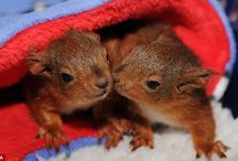 Cute Little Animals / by Clair Stockdale