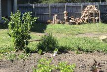 Te whenua o te Rama / My garden
