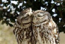 Owls for Yentl