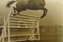 Hunter/Jumper / Photos of Hunters and Jumpers.