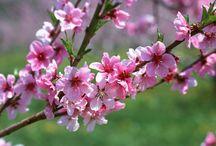 Bewundern die Blumen im ganzen Jahr in Vietnam / Jeder Monat gibt es unterschiedliche Blumenart in verschiedenen Provinzen Vietnams. Beim Reisen nach Vietnam kann man irgendwo und irgendwann die schönsten Blumen sehen