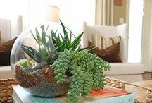 Shop Front Window / http://inhabitat.com/yield-deigns-beautiful-birch-planter-boxes-pop-with-color/ http://forchicsake.com/dorm-room-decor-part-1/