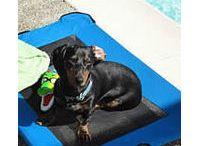 Summer Pups!