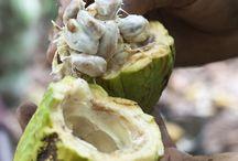 Inhala Cacao