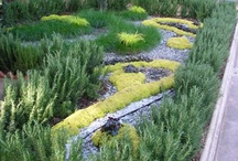 Lawn Gardening WOW! / Lawn gardening is so much more than just terrific grass. Let's talk garden paths, edges, stones, planters and alternatives to grass!