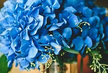 Something Blue... / by Carillon Beach Weddings & Events