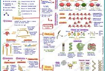biologia knowladge