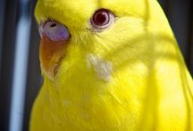 Hello Yellow!!!!
