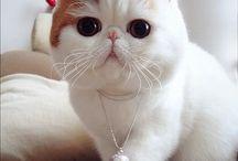 Fotografía de la semana / Gato o gata cuya fotografía ha sido elegida como la mejor de la semana.