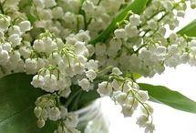 Blomster i skogen Mai