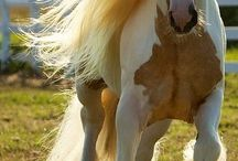 *horses* / Lovely hors pictures...