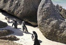Pinguine / Tolle Bilder, Reiserberichte und Infos rund um Pinguine