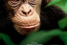 See Chimpanzee Save Chimpanzee #DisneyGlobalEvent  / DisneyNature Chimpanze opens in Theaters April 20! Red Carpet Event experiences and where to find more information / by Tricia Nightowlmama