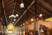 Horses & Horses Barn
