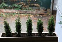 Window box ideas / by Jenna Dawson