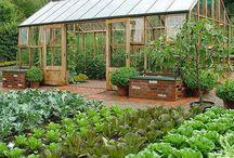 Huerta y Cultivos