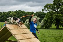 Muddy Dog Challenge 2016 / Muddy Dog Challenge 2016 is the UK's first obstacle course and mud run where animal lovers can take part with their dogs. Take on the challenge with or without your four-legged legged friend and fundraise for Battersea.