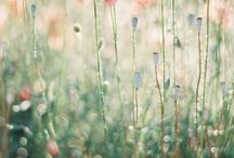 flower flower flower