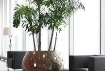 Interior Green Design
