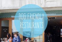 Dog friendly / Some top pet friendly attractions, pubs and days out in Cornwall