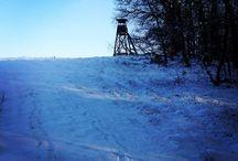 Pierwsze zimowe wybieganie / Wycieczka do lasu - pierwsze zimowe wybieganie w warunkach rzeczywiście zimowych
