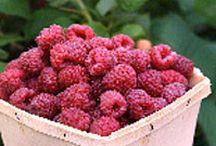 Berries / Fruit-plant