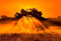 orange / by Toni Jeter-Stanton